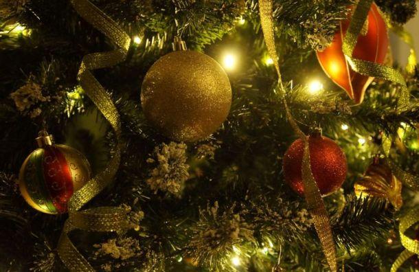Новогодние ели в Санкт-Петербурге защитят от вандалов и воров