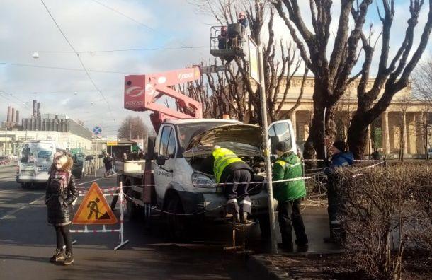 Рабочие застряли на дереве, которое хотели подпилить