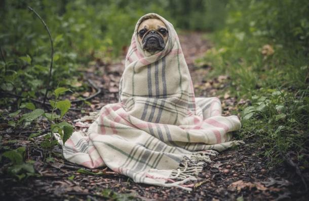 Ветеринары: Домашние животные не могут заразиться коронавирусом