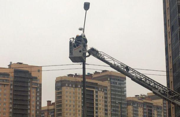 Пожарные сняли ворону со столба на Парнасе