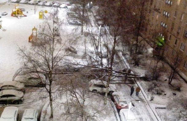 Ветер повалил несколько деревьев на юге Санкт-Петербурга