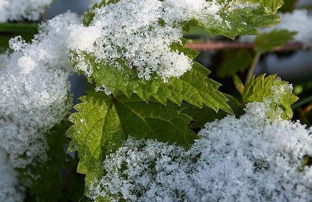 Первый снег в Санкт-Петербурге выпадет в пятницу