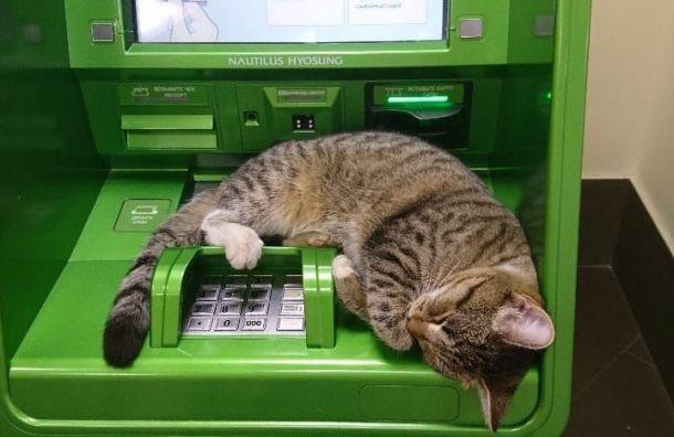 Произошел масштабный сбой в работе онлайн-сервиса Сбербанка