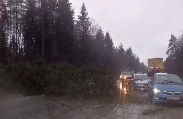 Шторм срывает крыши, валит деревья и двигает машины в Санкт-Петербурге