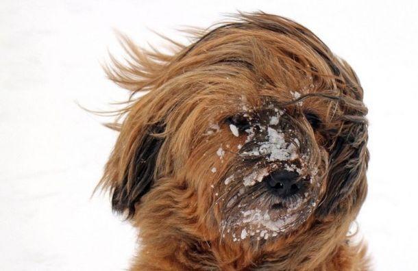 Суббота будет в Санкт-Петербурге холодной и снежной
