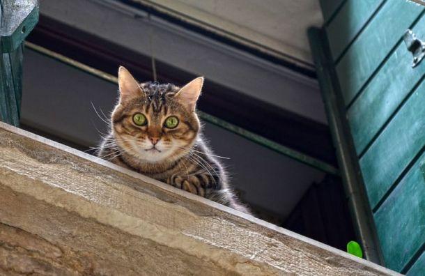 Петербурженка сорвалась с карниза, пытаясь спасти кошку