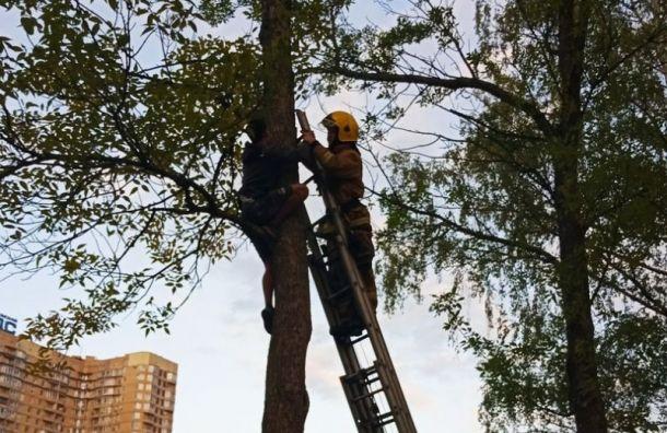 Петербургские спасатели сняли с дерева застрявшего подростка