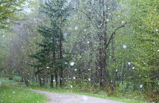 Санкт-Петербург 24 апреля ждут дожди со снегом