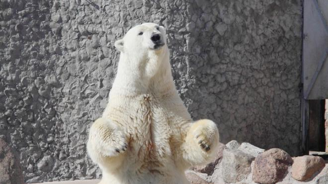 Медведице Усладе из Ленинградского зоопарка исполнилось 33 года