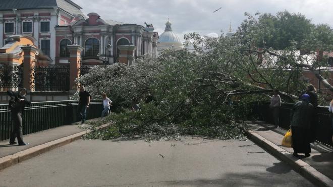 Рухнувшее дерево перегородило путь в Александро-Невскую лавру