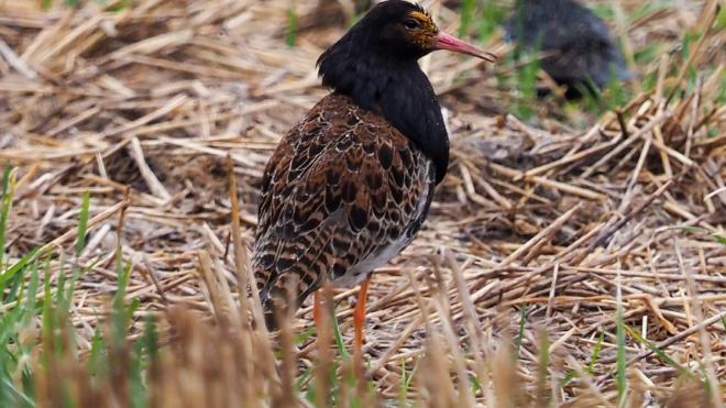 В Гатчинском районе сфотографировали редкую птицу из Красной книги