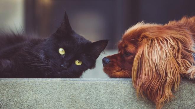 В квартирах петербуржцев предлагают ограничить количество собак и кошек