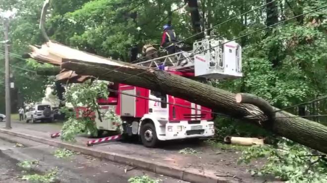В Петербурге за два дня ветром повалило 126 деревьев