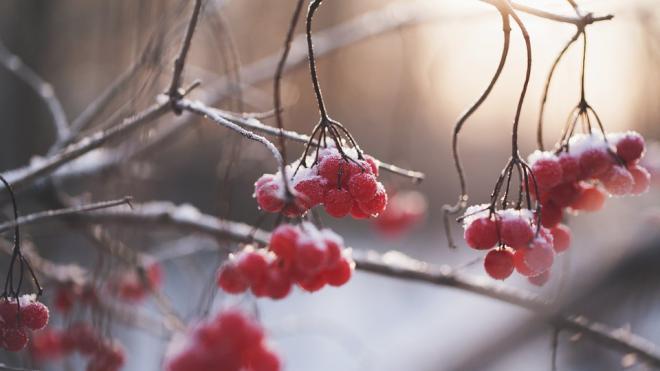 В Петербурге рабочая неделя начнется с мокрого снега