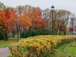 Шторм в Петербурге повалил почти 40 деревьев и ограждения