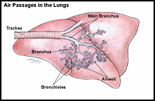 Definition and Causes of Bronchitis 1005534394