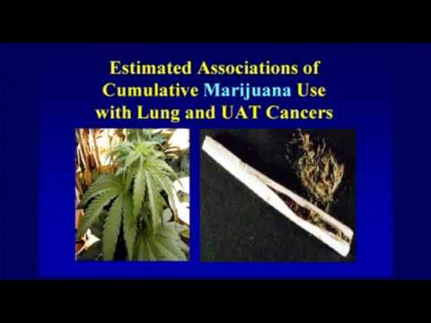 Does Marijuana Effect Bronchitis 2061067102
