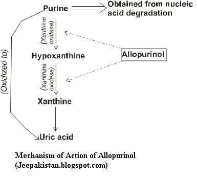 Side Effects from Allopurinol, How to Cure Gout Attacks Allopurinol-C-Mechanism-of-Action5