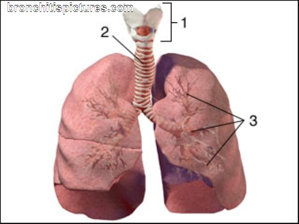 Breathing Bronchitis: Complementary and Alternative Baby-Bronchitis40