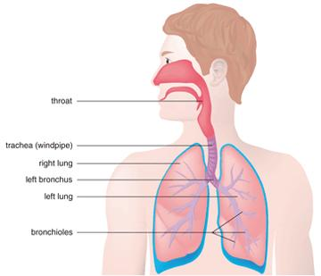 Bronchitis Acute and What is Bronchitis and What are  Bronchitis-Symptoms84