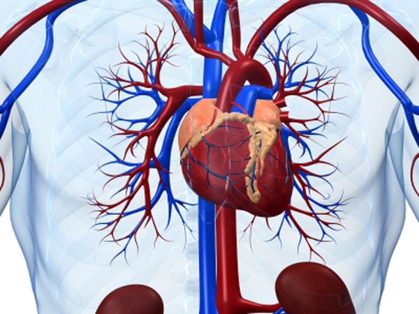Bronchitis Illness and Interesting Aspects of Acute Cerebrovascular-Disease2