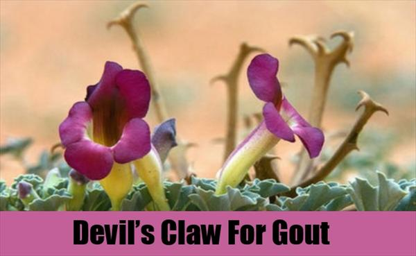 Gout Natural Treatment: Different Kinds of Gout Causes Devil-s-Claw-For-Gout