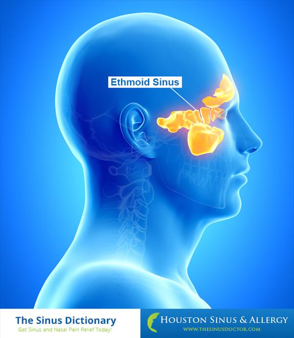 Sinuses. What is Ethmoid Sinus?. Getting to Know Ethmoid Ethmoid-Sinus-final