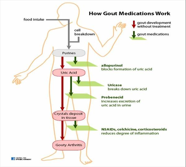 Alcohol and Gout and Lisa Mcdowell's Cure Gout Now Ebook Figure-CPurines-to-Uric-acid-and-How-Gout-Medications-Work
