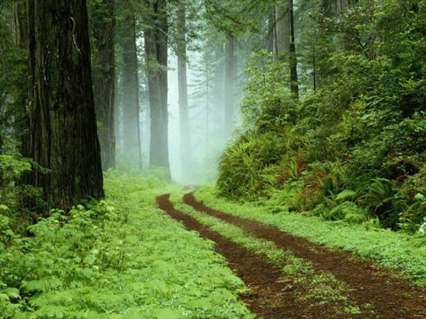 Why Suffer and Yet Sinusitis Treatments are Here With Us Forest-std74