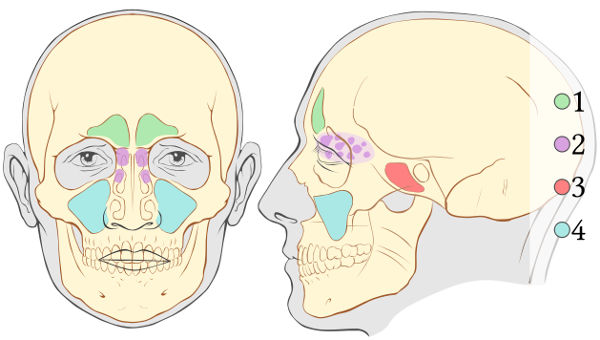 the Awesome Process of Go Up Sinuplasty Paranasal-sinuses