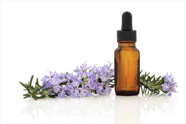 [Image: Rosemary-Essential-Oil5.jpeg]