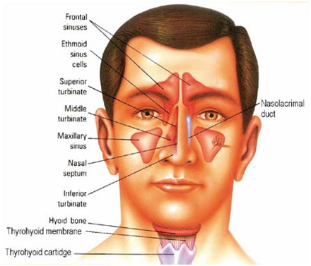 Sinusitis Ears Popping and Treatment of Fungal Infections Sphenoid-sinuses62