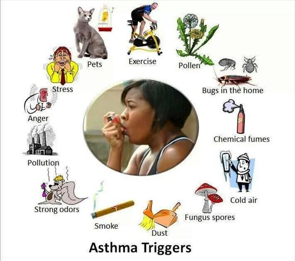 Cough Information and Prevention Asthmatic-bronchiole-and-normal-bronchiole1