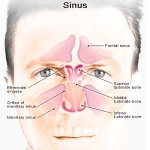 Can Sinuses Drain: Home Remedies for Sinus Infections: Cba-f-cfacda-dc-fb-f