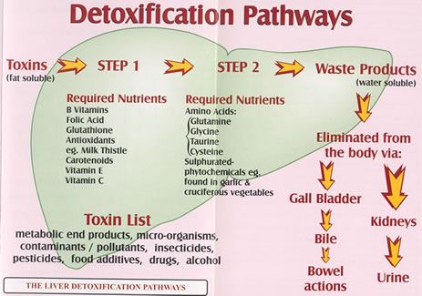False Gout and Does Food Effect Your Pain? Detox-pathways