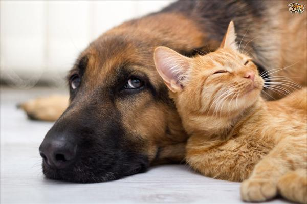 Molecular Structure of Pheromones Do-plug-in-pheromone-diffusers-for-cats-and-dogs-really-work-b
