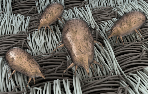 Cure Sinusitis and Chronic Stuffy Nose? Fungus May be  Dust-mites3