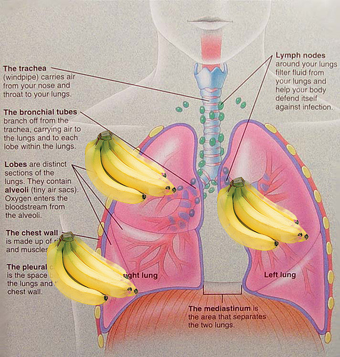 Second Hand Smoking Bronchitis: How to Recognize, Avoid, E-c