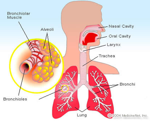 Persistent Cough. Bronchitis and Its Effects Emphysema91