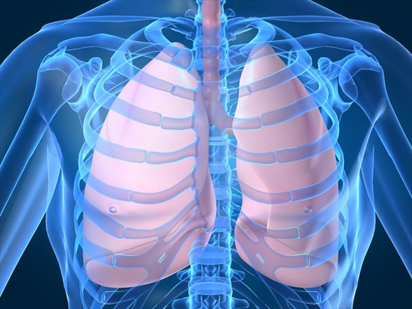 Lungs. Bronchitis Symptoms in Adults Healthy-lungs1