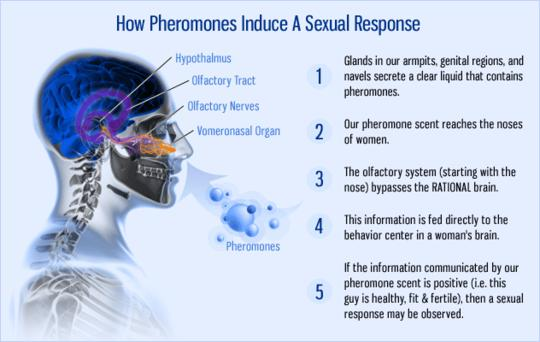 Nexus Pheromone Concentrate and What are Androsterone How-pheromones-work