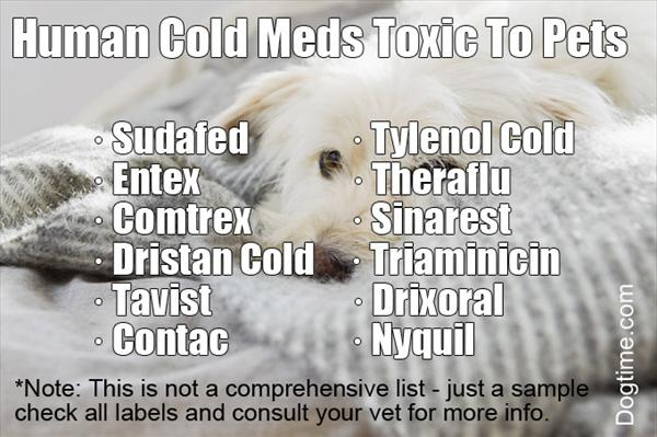 Sinus Flush: How Sinusitis May Appear as a Cold Human-meds-toxic-to-pets