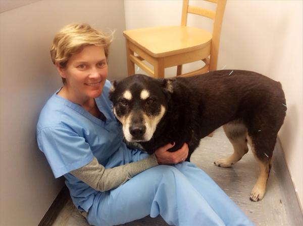 Gout Teatment Coffee and Using Acupuncture to Help Pets Ktrk-pet-doc