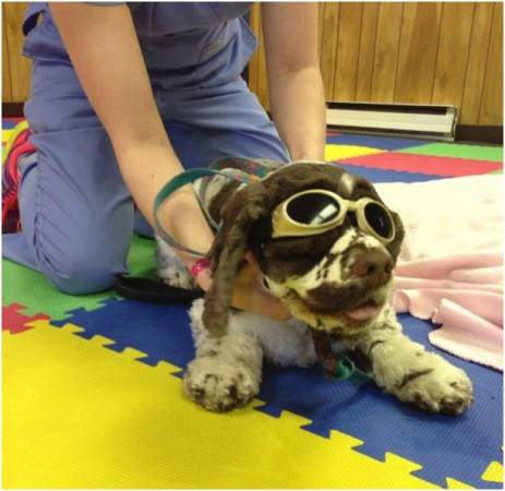 Tests for Gout and Massage Therapy Helps Pets Too Laser2