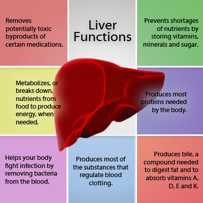 Does Food Effect Your Pain? Liver-disease-s-a-liver-functions