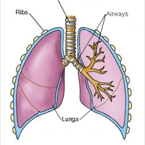 is Asthma Like Bronchitis? Lungs-default