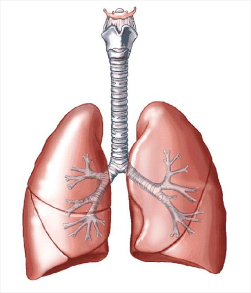 [Image: lungs331.jpeg]