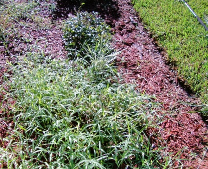 Treatment for Pile and Home Pile Treatment can Supply Moreweedsc-std