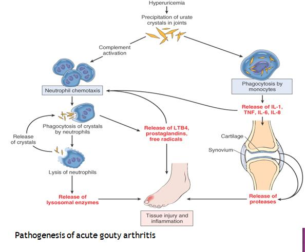 Pathophysiology Of Colchicine. Reasons To Love Your Gout Prevention Diet Pathogenesis