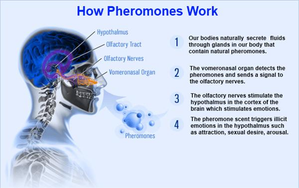 Buy Wholesale Pheromones, Pheromones Cologne, It's Nice! Pheromone-cologne92